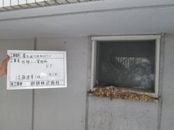 佐藤建業 ハト糞処理 015.JPGのサムネール画像のサムネール画像のサムネール画像